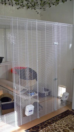 BobsDen Bengal Cattery - Inside & Out - Roomy, Bright and Sunny